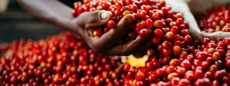 Red Coffee beans