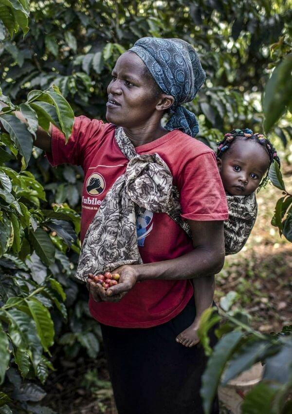coffee in kenya